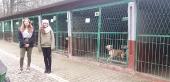Kolejna wizyta w schrnisku dla bezdomnych zwierząt - 2019