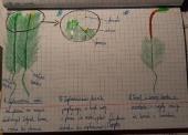 Lekcje Online - BIOLOGIA